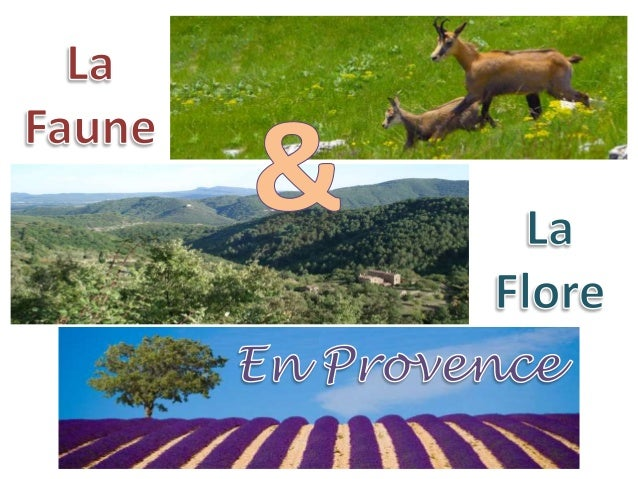 Le climat (en général) • Provence a un climat relativement méditerranéen, avec des étés chauds et secs • En hiver , les te...
