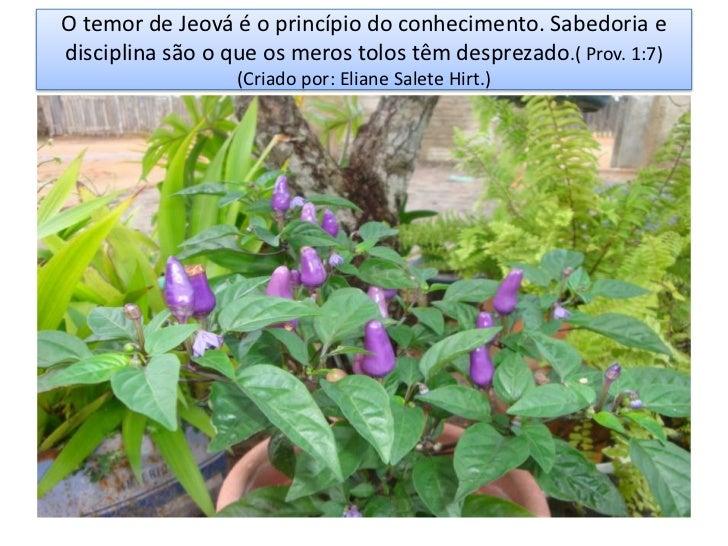 O temor de Jeová é o princípio do conhecimento. Sabedoria edisciplina são o que os meros tolos têm desprezado.( Prov. 1:7)...