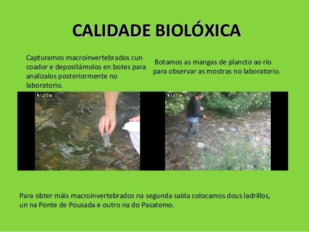 CALIDADE BIOLÓXICACALIDADE BIOLÓXICA Capturamos macroinvertebrados cun coador e depositámolos en botes para analizalos pos...