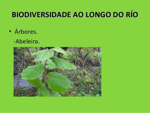 BIODIVERSIDADE AO LONGO DO RÍOBIODIVERSIDADE AO LONGO DO RÍO • Árbores. -Abeleira.