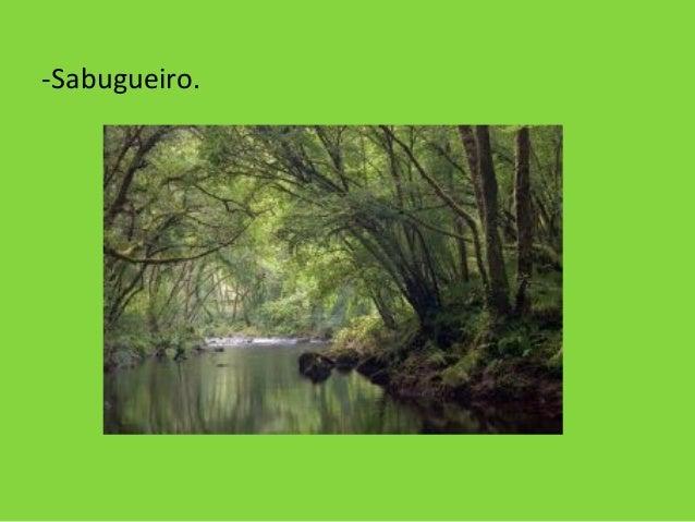 -Sabugueiro.