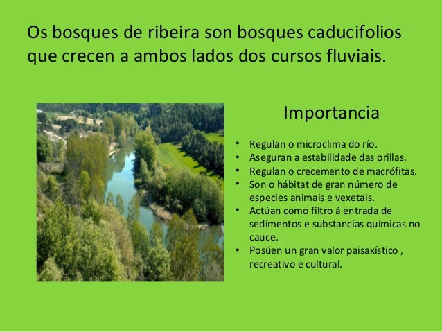 Os bosques de ribeira son bosques caducifolios que crecen a ambos lados dos cursos fluviais. Importancia • Regulan o micro...