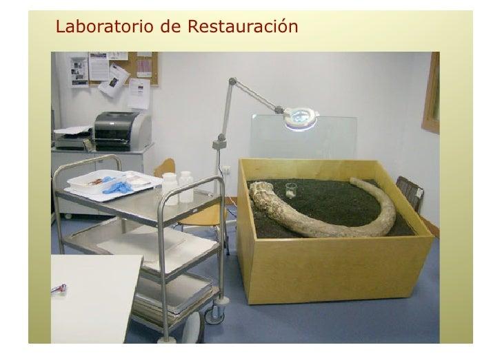 """Museo Interactivo AREAS de Actividad    • Exposiciones, Actividades y """"Ventanas""""                       • Programas de Di..."""
