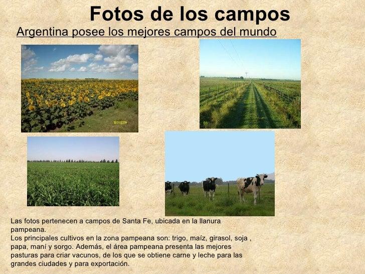 Fotos de los campos Las fotos pertenecen a campos de Santa Fe, ubicada en la llanura pampeana. Los principales cultivos en...