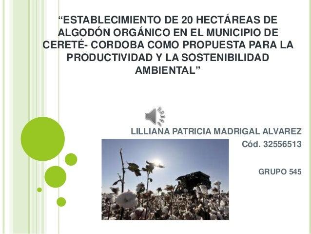 """""""ESTABLECIMIENTO DE 20 HECTÁREAS DE ALGODÓN ORGÁNICO EN EL MUNICIPIO DE CERETÉ- CORDOBA COMO PROPUESTA PARA LA PRODUCTIVID..."""