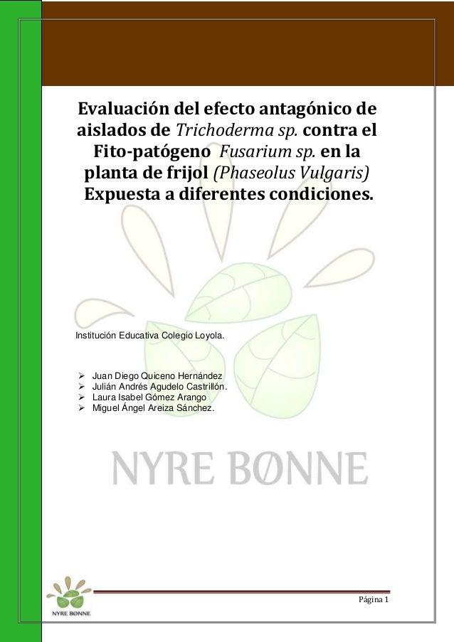 Evaluación del efecto antagónico de  aislados de Trichoderma sp. contra el  Fito-patógeno Fusarium sp. en la  planta de fr...