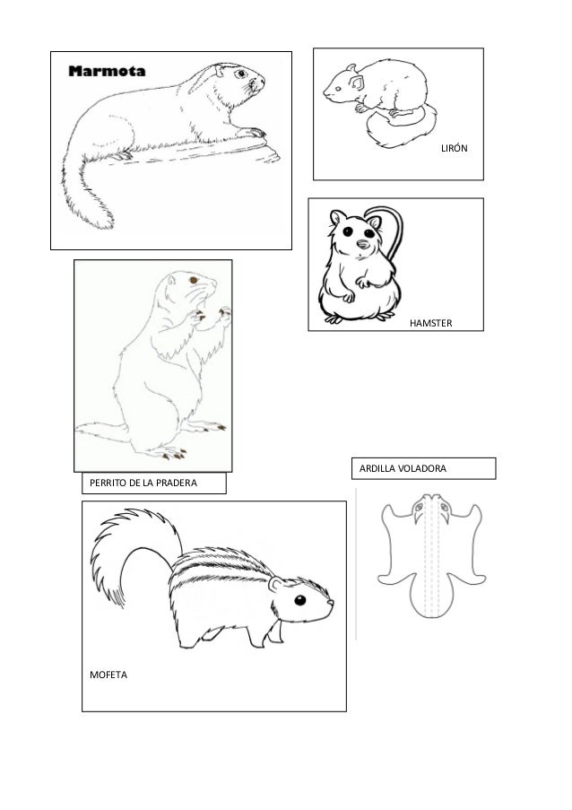 Proyecto animales en otoo fichas dibujos y dems recursos