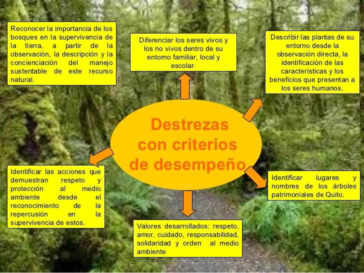 Proyecto: El bosque un hábitat maravilloso