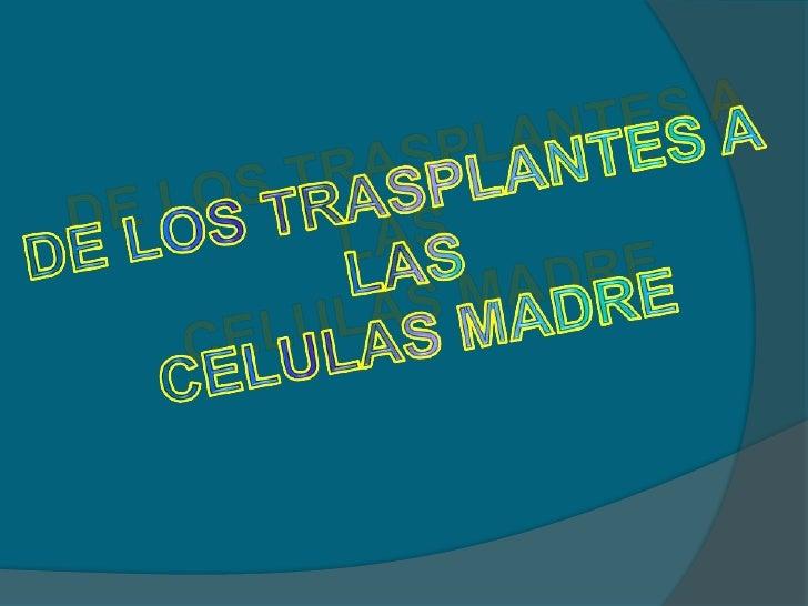 DE LOS TRASPLANTES A LAS <br />CELULAS MADRE<br />