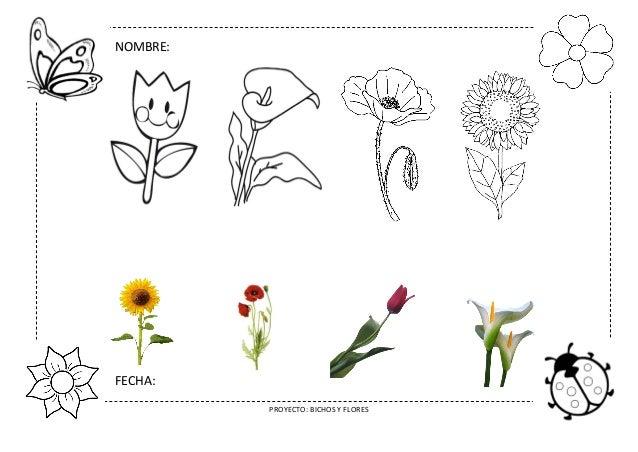 Proyecto Bichos Y Flores