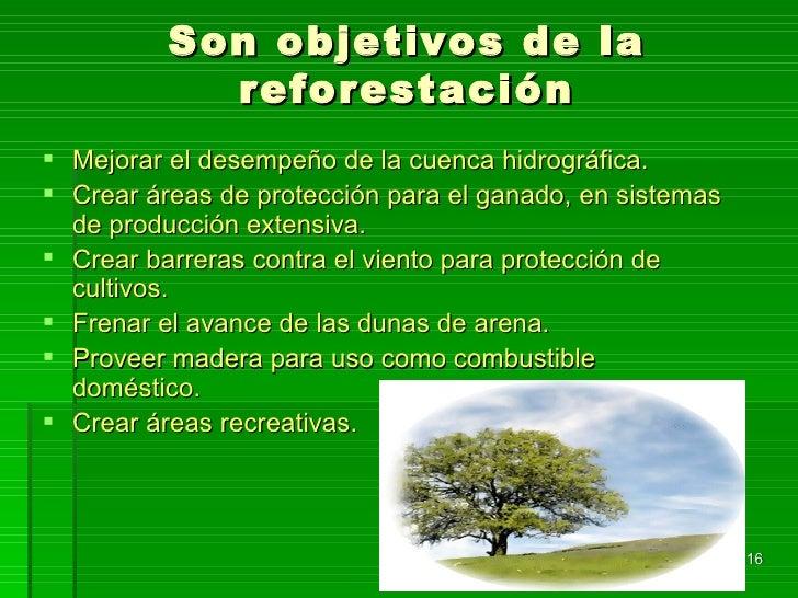 Proyecto Comunidad Verde Desde La Escuela