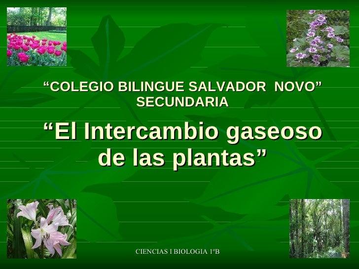 """"""" COLEGIO BILINGUE SALVADOR  NOVO"""" SECUNDARIA """"El Intercambio gaseoso de las plantas"""" CIENCIAS I BIOLOGIA 1ºB"""