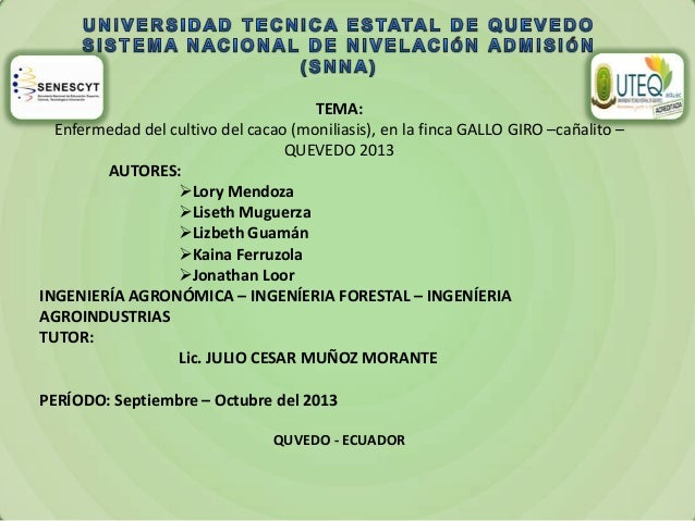 TEMA: Enfermedad del cultivo del cacao (moniliasis), en la finca GALLO GIRO –cañalito – QUEVEDO 2013 AUTORES: Lory Mendoz...