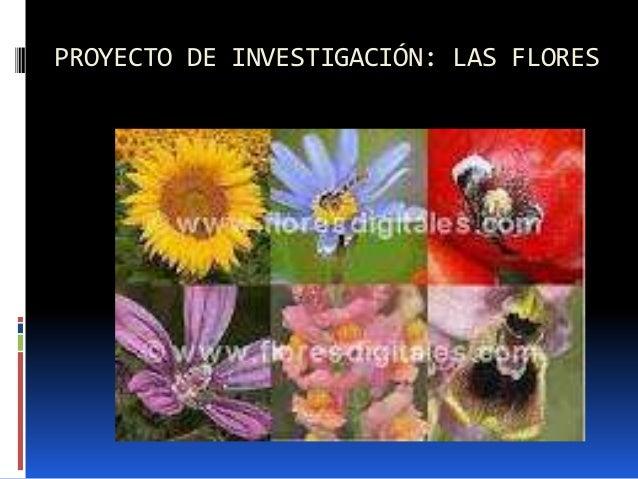 PROYECTO DE INVESTIGACIÓN: LAS FLORES