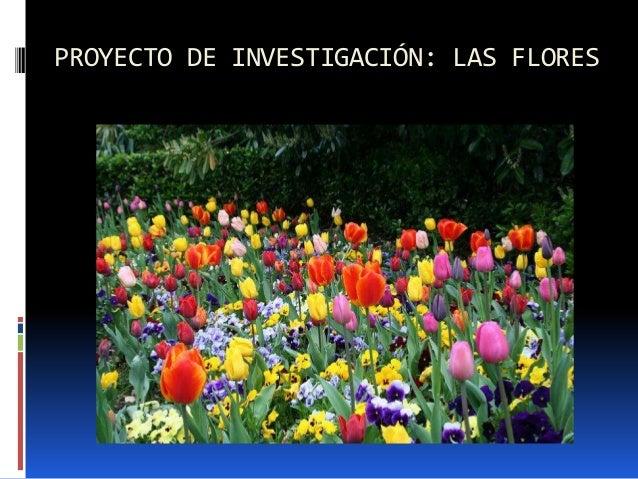 Proyecto de investigaci n for Proyecto de investigacion de plantas ornamentales