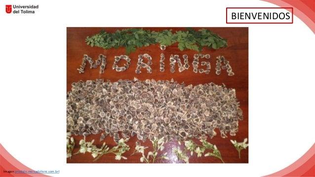 BIENVENIDOS Imagen produto.mercadolivre.com.brl