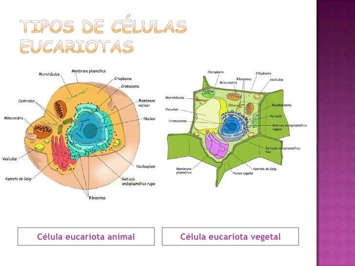Super Las células humanas RL22