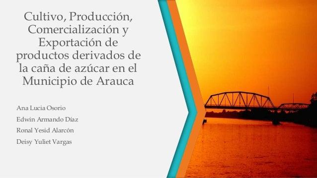 Cultivo, Producción, Comercialización y Exportación de productos derivados de la caña de azúcar en el Municipio de Arauca ...