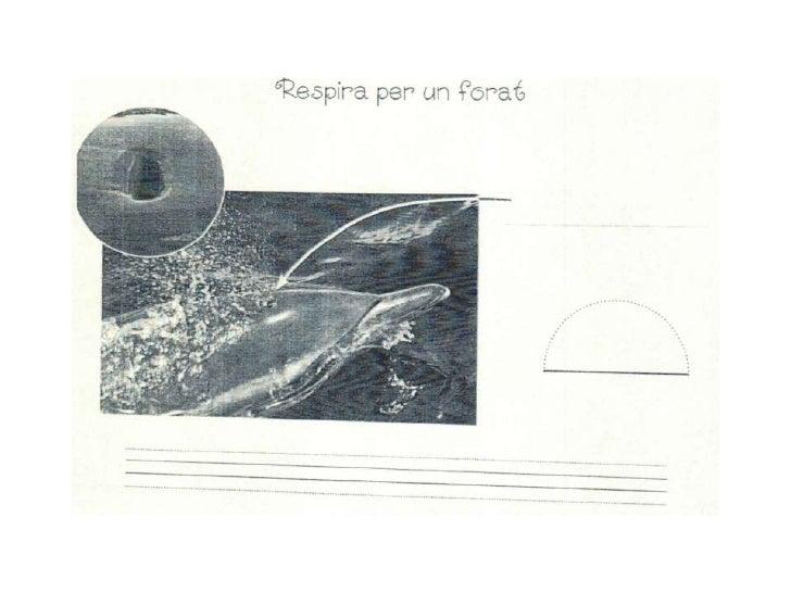 Proyecto delfines original
