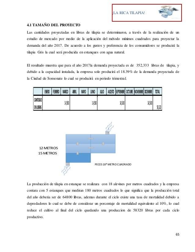 Proyecto de tilapia pdf for Proyecto de tilapia en estanques