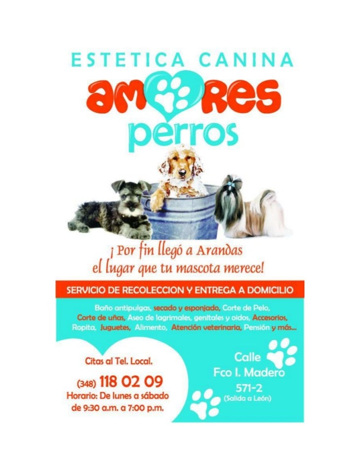 Proyecto Estética Canina Amores Perros                                                        Brenda Hernández FloresClien...
