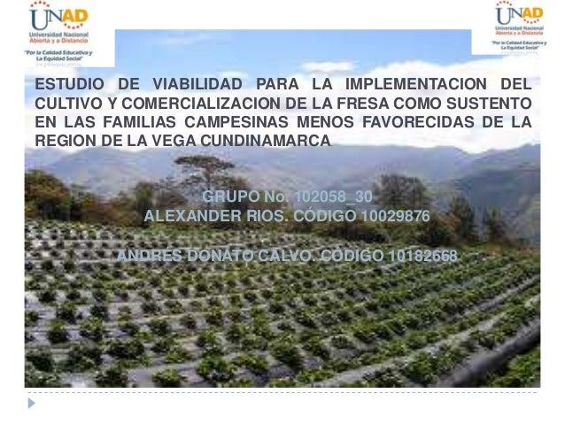 ESTUDIO DE VIABILIDAD PARA LA IMPLEMENTACION DEL CULTIVO Y COMERCIALIZACION DE LA FRESA COMO SUSTENTO EN LAS FAMILIAS CAMP...