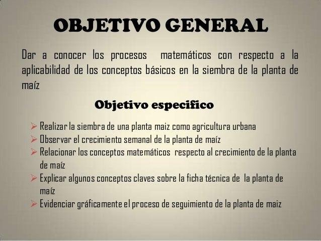 Proyecto del an lisis del crecimiento de la planta de ma z for Objetivo general de un vivero