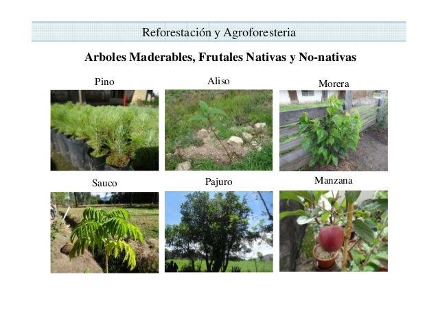 Proyecto incremento de los ingresos econ mico de los for Arboles con sus nombres y caracteristicas