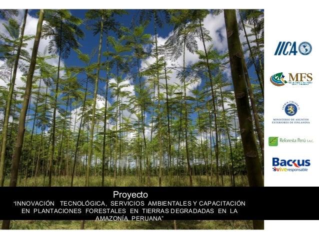 """Proyecto """"INNOVACIÓN TECNOLÓGICA, SERVICIOS AMBIENTALES Y CAPACITACIÓN EN PLANTACIONES FORESTALES EN TIERRAS DEGRADADAS EN..."""