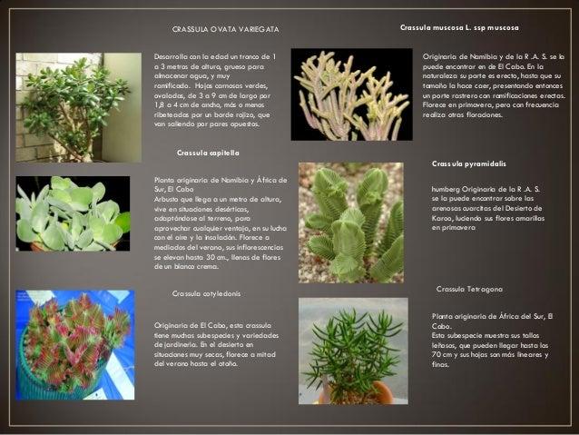 Proyecto jardin botanico arq carolina for Informacion sobre el jardin botanico