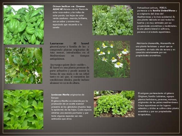 Proyecto jardin botanico arq carolina for Plantas de un jardin botanico