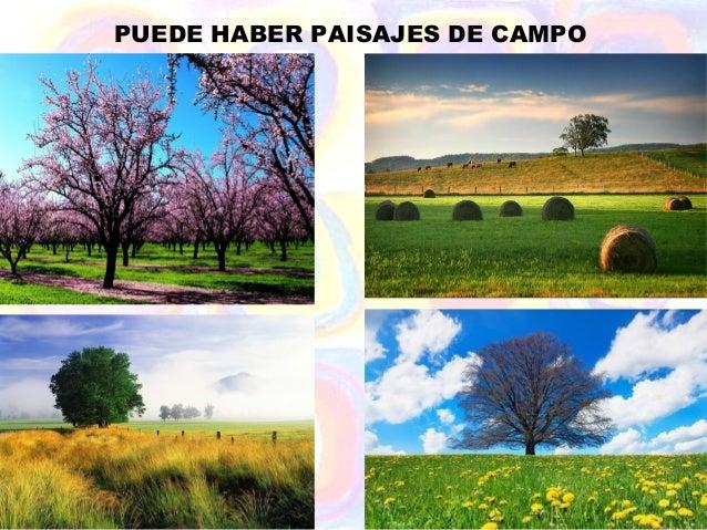PUEDE HABER PAISAJES DE CAMPO