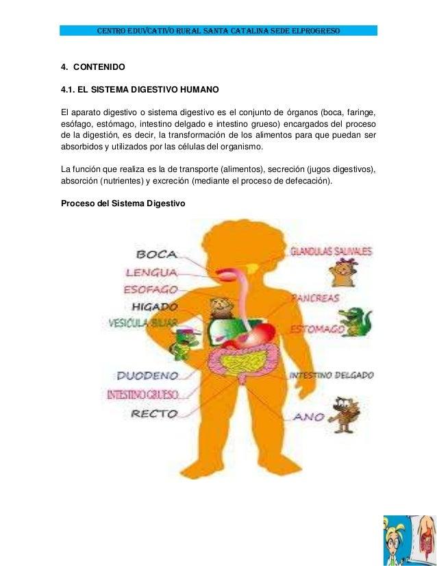 Proyecto Pedagógico de Aula: El Sistema Digestivo en Ingles