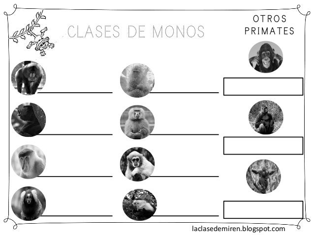 CLASES DE MONOS OTROS PRIMATES laclasedemiren.blogspot.com