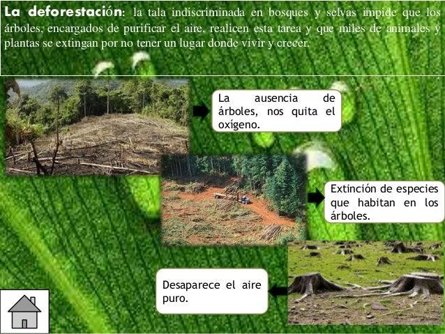 Proyecto medio ambiente for Medio en el que habitan los arboles