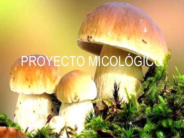 PROYECTO MICOLÓGICO