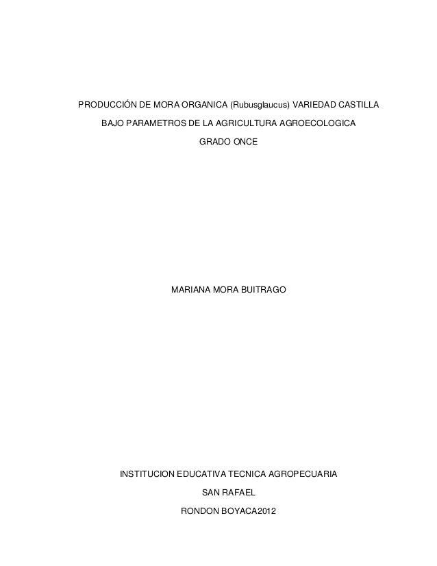 PRODUCCIÓN DE MORA ORGANICA (Rubusglaucus) VARIEDAD CASTILLA BAJO PARAMETROS DE LA AGRICULTURA AGROECOLOGICA GRADO ONCE  M...