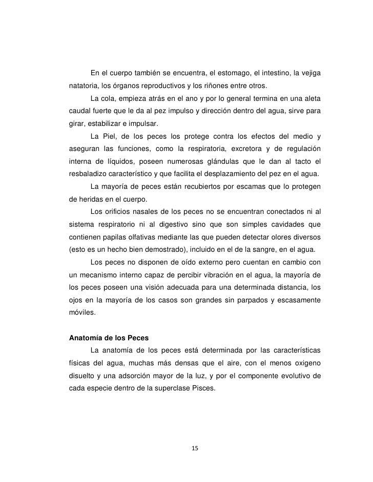 Hermosa Peces óseos Hoja De Cálculo De La Anatomía Elaboración ...