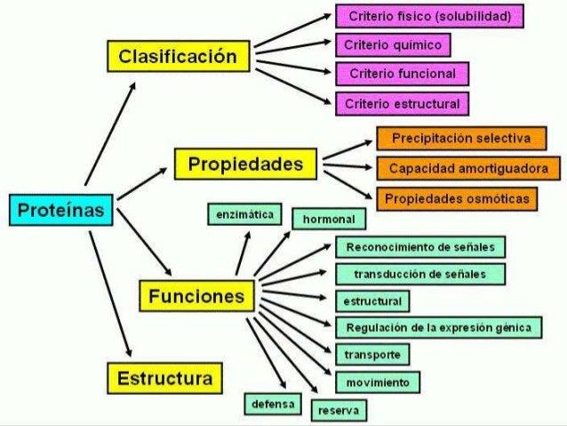 Proyecto de proteinas d for Quimica de los alimentos pdf