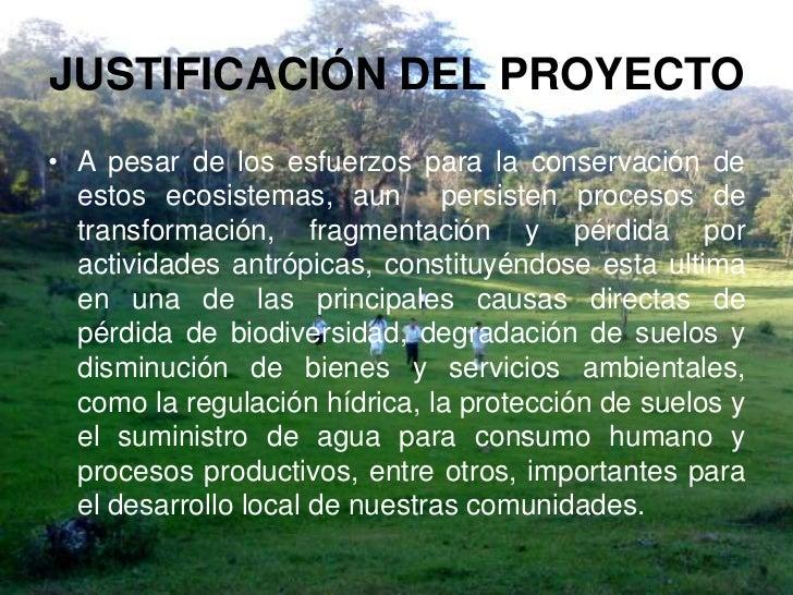 proyecto vivero forestal institucional On modelo de proyecto vivero forestal