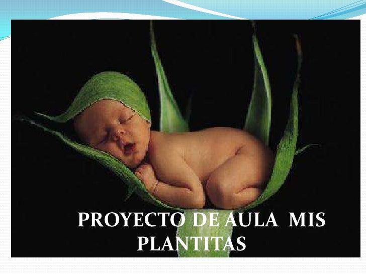PROYECTO DE AULA MIS    PLANTITAS