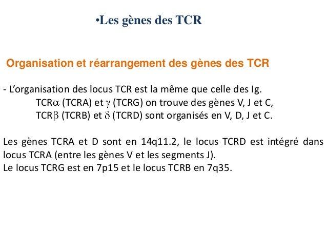 •Les gènes des TCROrganisation et réarrangement des gènes des TCR- L'organisation des locus TCR est la même que celle des ...