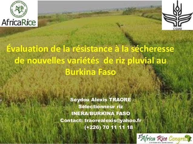 Évaluation de la résistance à la sécheresse de nouvelles variétés de riz pluvial au Burkina Faso Seydou Alexis TRAORE Séle...