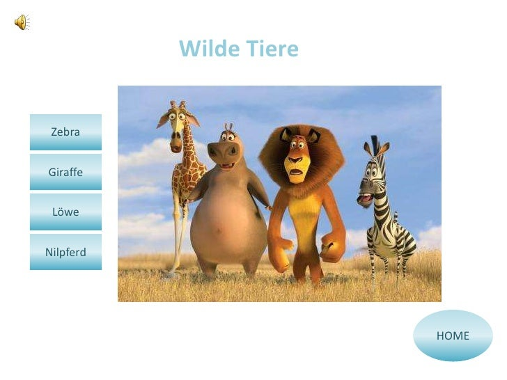 Wilde Tiere ZebraGiraffe LöweNilpferd                         HOME