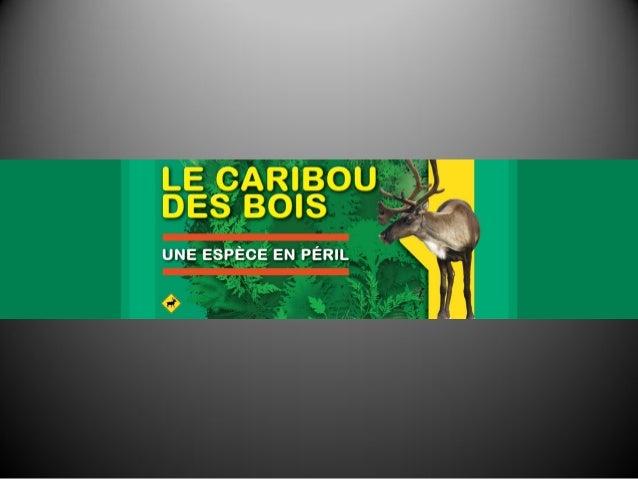 Collectif Caribou