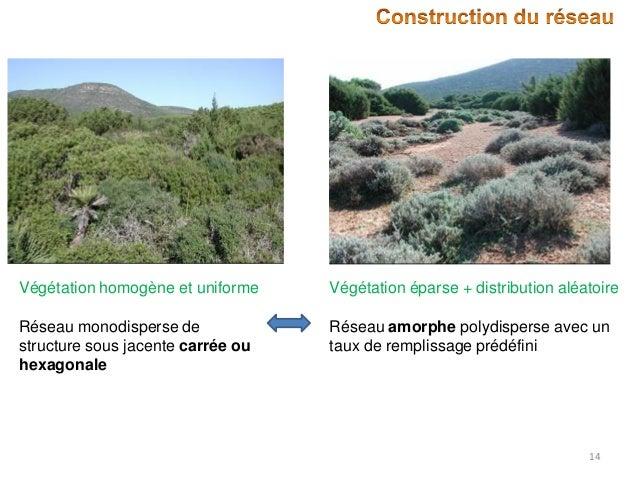 Végétation homogène et uniforme  Végétation éparse + distribution aléatoire  Réseau monodisperse de structure sous jacente...