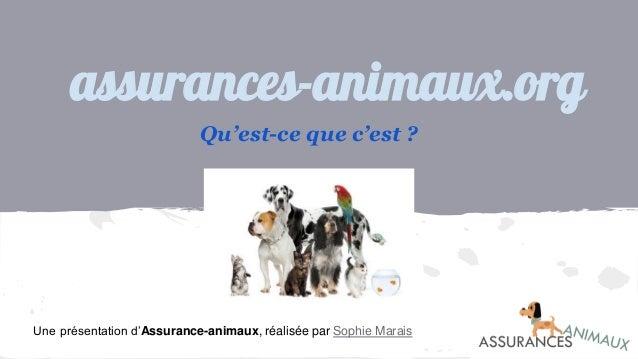 assurances-animaux.org Qu'est-ce que c'est ? Une présentation d'Assurance-animaux, réalisée par Sophie Marais