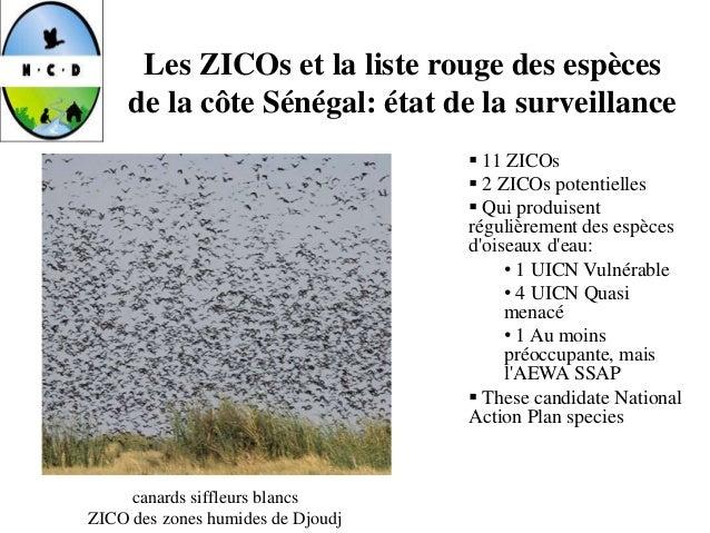 Les ZICOs et la liste rouge des espèces de la côte Sénégal: état de la surveillance  11 ZICOs  2 ZICOs potentielles  Qu...