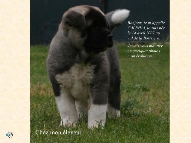 Chez mon éleveur Bonjour, je m'appelle CALINKA, je suis née le 14 avril 2007 au val de la Boissiére. Je vais vous montrer ...