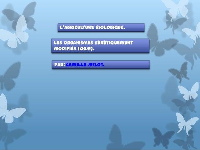 L'Agriculture Biologique. Les organismes génétiquement modifiés (OGM). Par: Camille Milot.